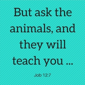 Ask the animals, and they will teach you.