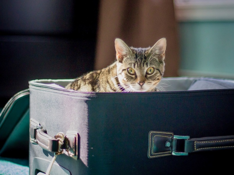 CAT IN SUITCASE LEWISLEIGHPHOTOGRAPHY ON PIXABAY