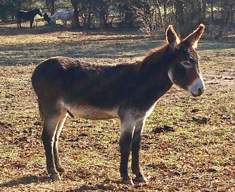 Diego in pasture 11.23.18 copy