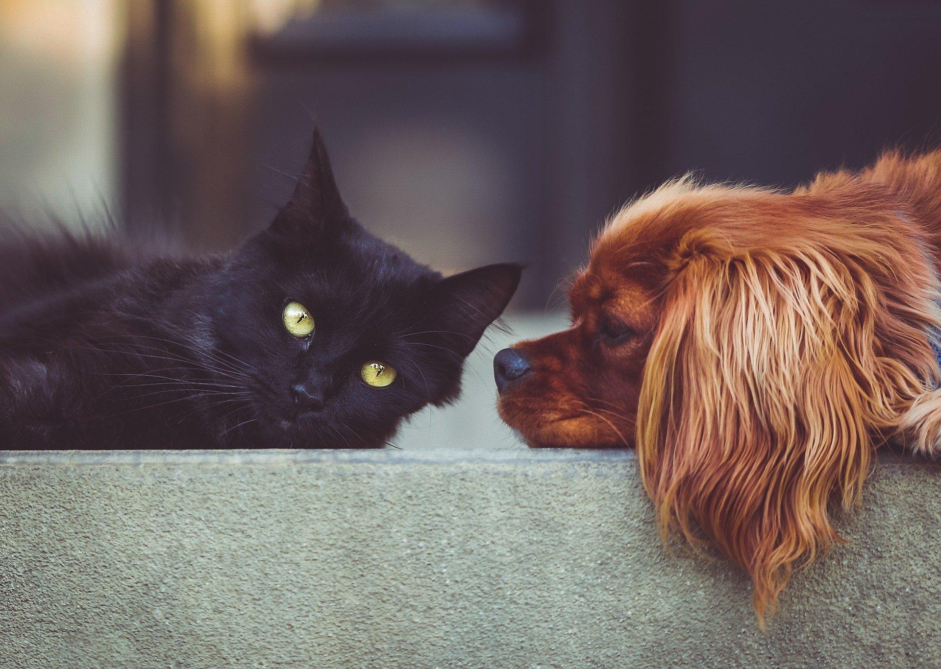 pixabay black cat and dog-2606759_1920