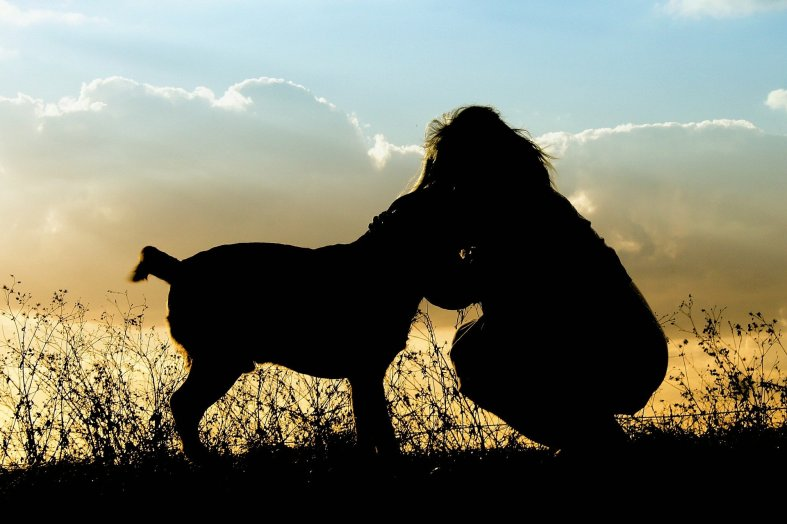 dog & person silhouette Image by Barbara Jackson from Pixabay